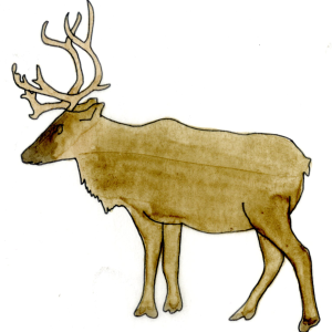 Caribou watercolor